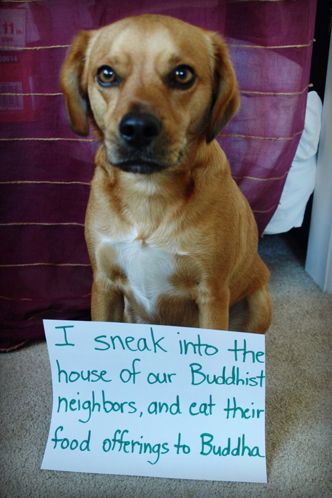 dogs-who-are-shamelessly-proud-of-what-they-just-did-12