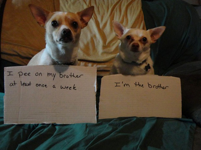 naughtiest dogs