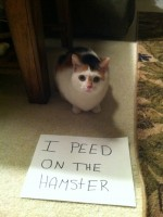 17 Of The Most Naughtiest Cats. What Have They Done now?