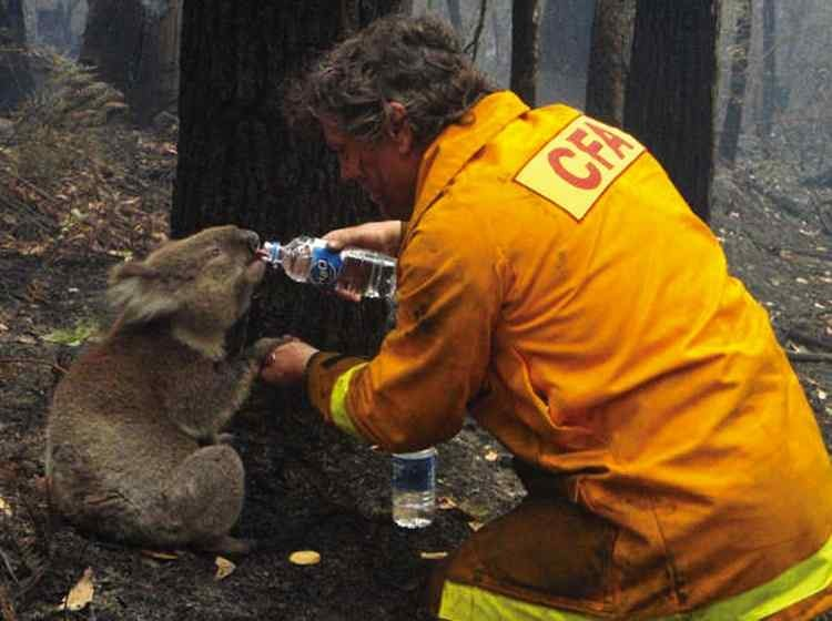 iconic-images-2000s-black-friday-bushfires-934x