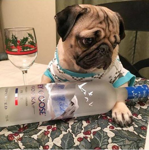 The Top 10 Viral Moments Of 2016: The Best Of Doug The Pug. The Top 10 Doug The Pug Moments