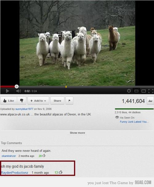 funny-youtube-comments-alpaca