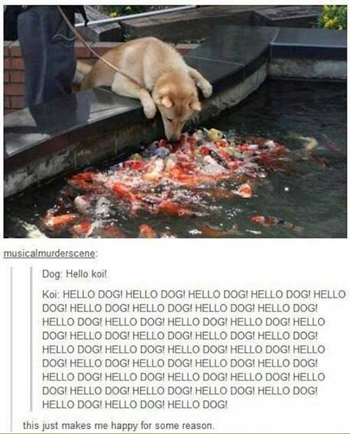 tumblr-photo-comments-dog