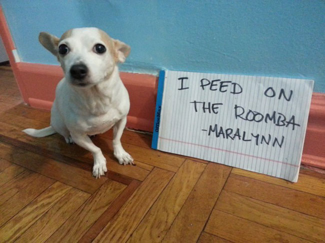 30 Naughtiest Dogs: You'll Crack Up When You Find Out What ...